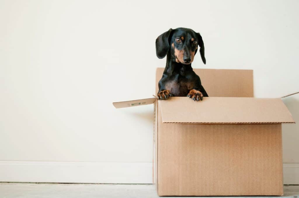Moving with Pets by Meehan's Family Moving